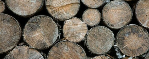 binderholz expandiert mit Produktion in die USA