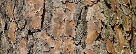 Flammschutzmittel direkt aus dem Holz?