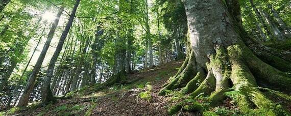 """Auch heuer wird """"Wald und Gesundheit"""" gelehrt"""