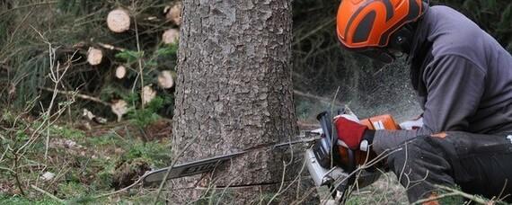Frauen in der Forstwirtschaft: Netzwerke geben Rückhalt