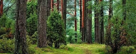 Klimawandel und der deutsche Wald