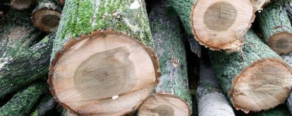Laubholz für Holzfaserplatten