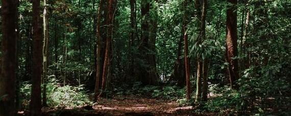 Klimanotstand: Wald und Holz sind Teil der Lösung