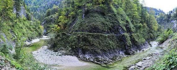Metamorphose zur Wald-Wildnis