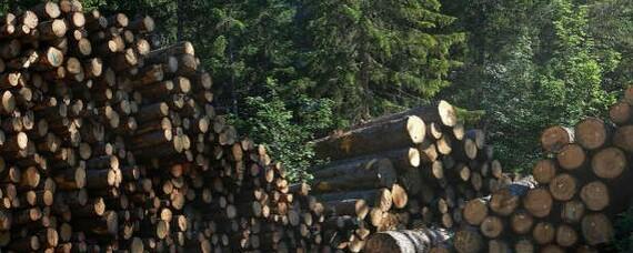WWF-Beschwerde gegen illegalen Holzhandel