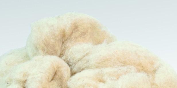 Sehr Schafwolle: Dämmstoff mit Kuschelfaktor GF24